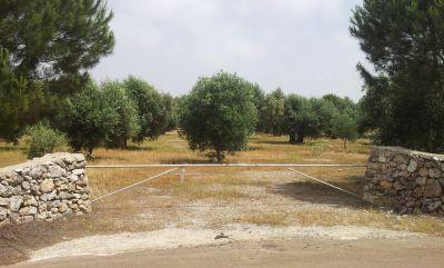 Terreno Petrose