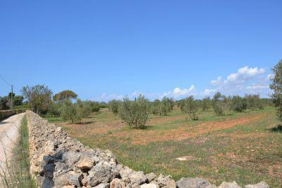Terreno con progetto L'Assunta