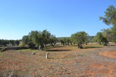 Terreno I Sassi