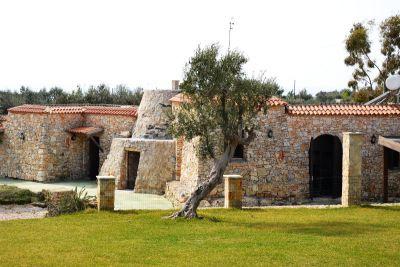 Pajara Salvia