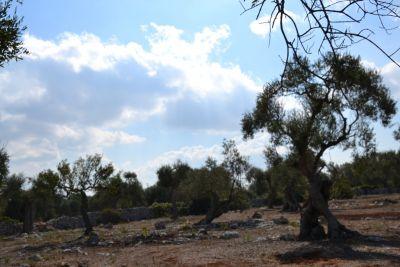 La Serra Salentina