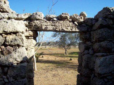 Terreno Agricolo con Pajara